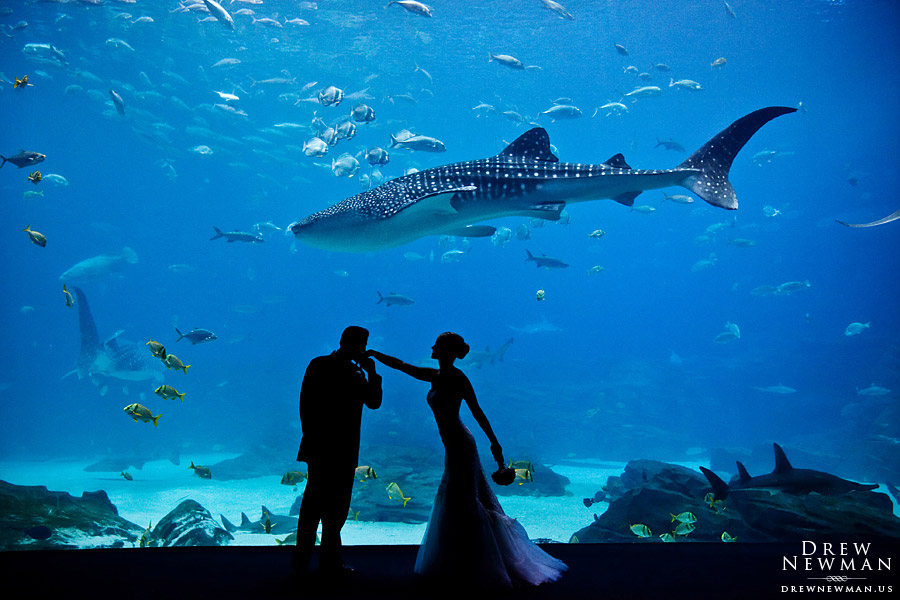 holly johns wedding at the georgia aquarium drew newman photographers