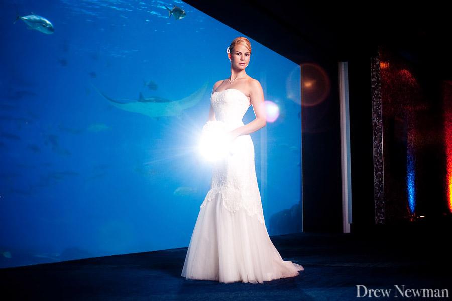 Georgia Aquarium Drew Newman Photographers