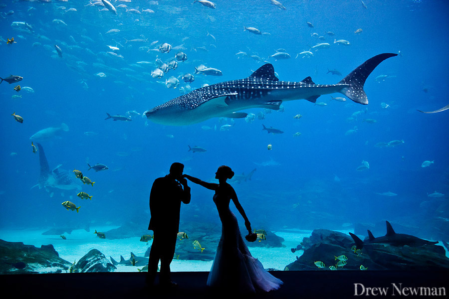 Drew Newman Photographers captures a stunning wedding at the Georgia Aqaurium.